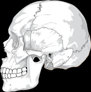 skull-31060