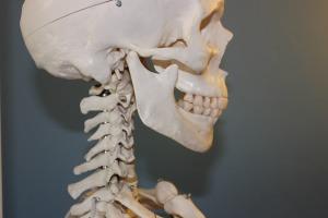 skull-778075_1920