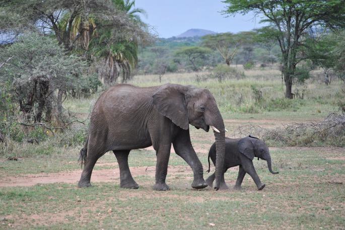 elephant-2011392_1920