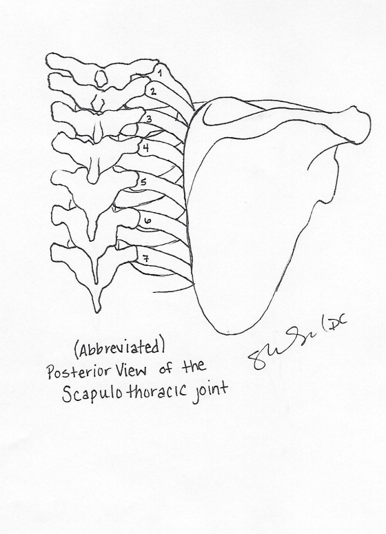 Posterior Scapulothoracic view