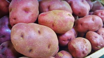 red-potatoes-1353476_1920